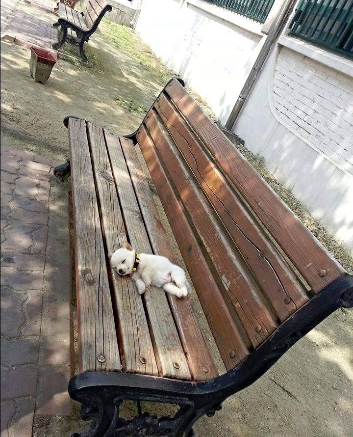 Tired pupper (Source: http://ift.tt/2fIjoRv)