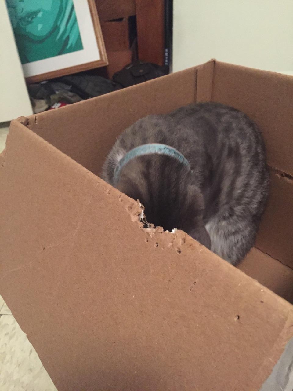 kitty for sale zavalla