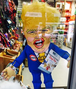 trump-dog-toy-in-a-shop-window-thats-ruff