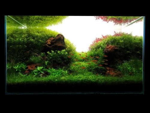 Nature Aquarium Aquascaping Aqua Design Planted Aquariums ...