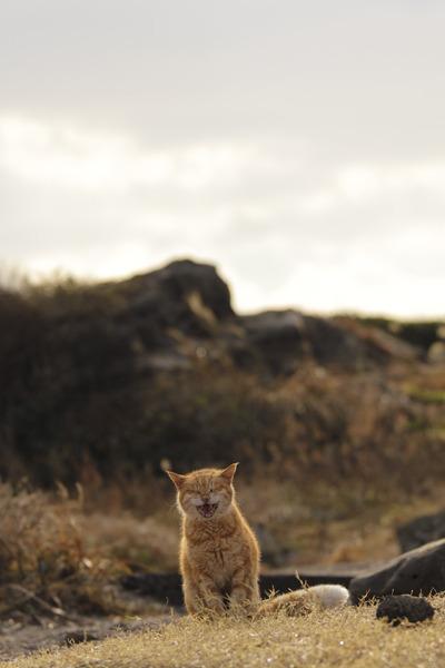 猫とPCケース 62台目©2ch.netYouTube動画>13本 ->画像>1243枚