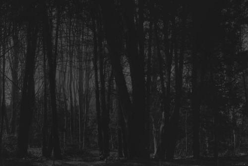 """From the series """" The Wedding of the Earth""""https://rafamonzo.tumblr.com  / https://tanaka-clan.tumblr #photography#black&white #the wedding of the earth #natural light#natural park#black forest#Forest#35mm photography #kodak tmax 400 #obscura#savage landscape#primitive landscape#primitive life#trees #a man without a country  #a man altered the landscape"""
