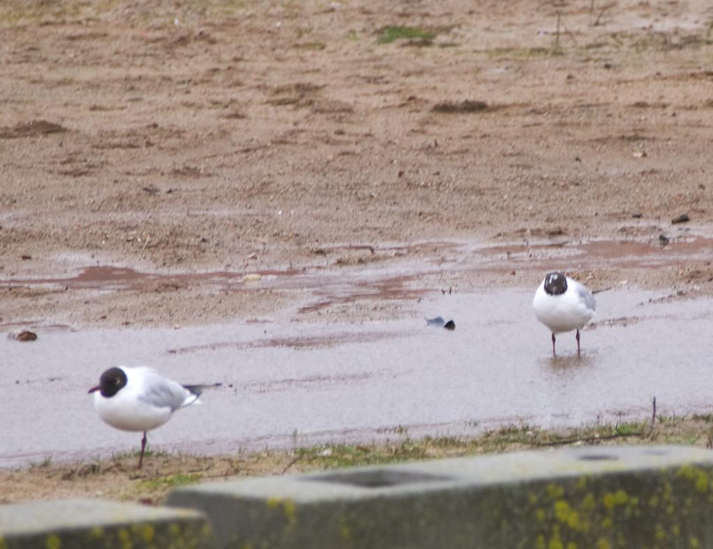 #seagull#animal#bird#my#beach