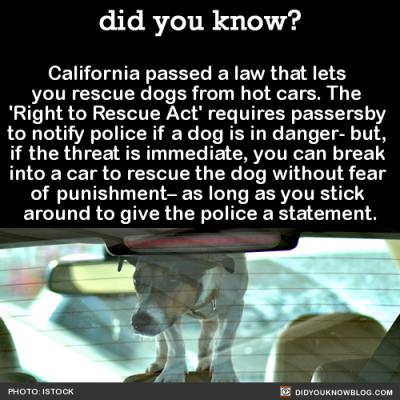 dog law california | Tumblr