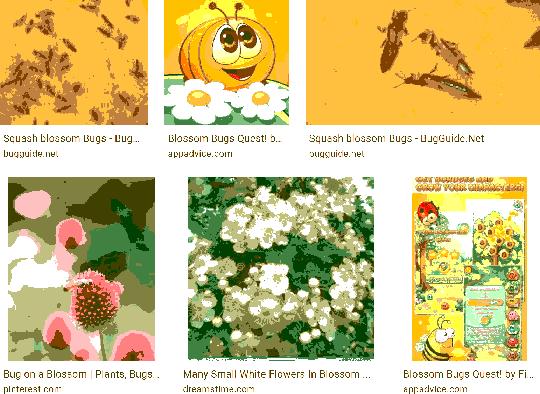 blossom bugs #blossom#bugs#google#art#aesthetic
