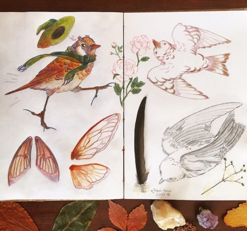 🦗🌿🐦[ID: Photo of a sketchbook spread with autumnal colours, showing drawings of birds and insect wings. One of the birds appears to be running, it's wearing a green scarf and a matching wizard's hat that's blown off its head. There's also a primary feather of a common swift taped onto the paper and below the sketchbook are pressed leaves and two minaral stones.] #Illustration #coloured pencil sketches #sketchbook spread#witchy #artists on tumblr #my art#2019