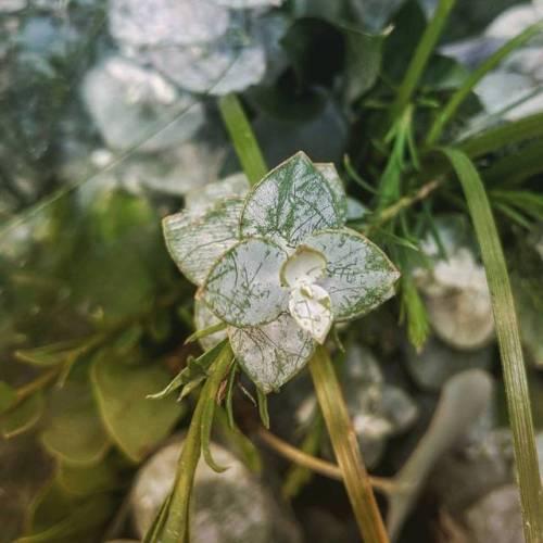 bouquet deptheffect eucalyptus