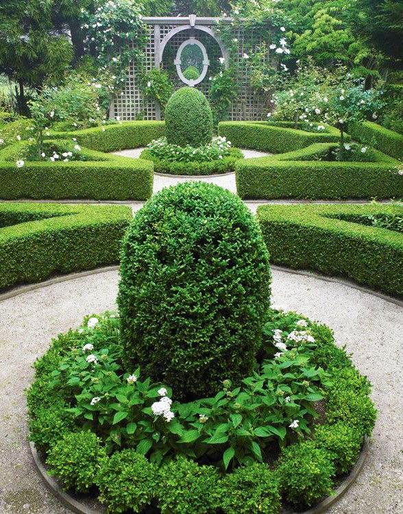 MADABOUT GARDEN DESIGN - Box hedge