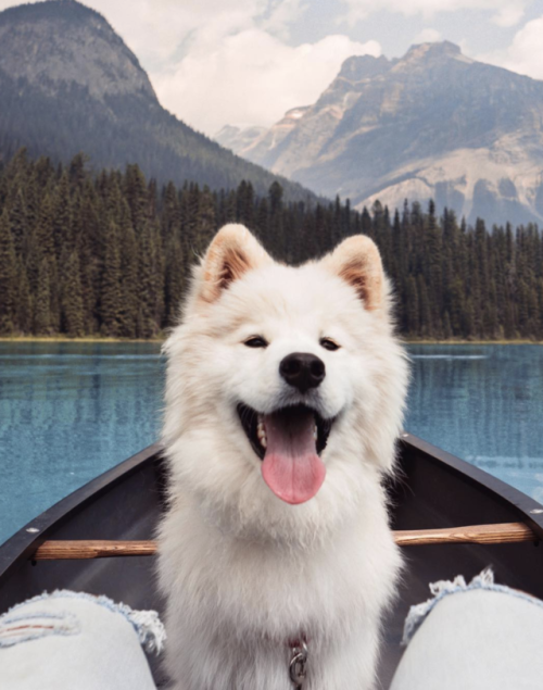 animals animal dog dogs photography pets puppy love inspiration motivation summer tropical dreams goals dog lover dog owner travel travelling landscape paradise nature adventure explore