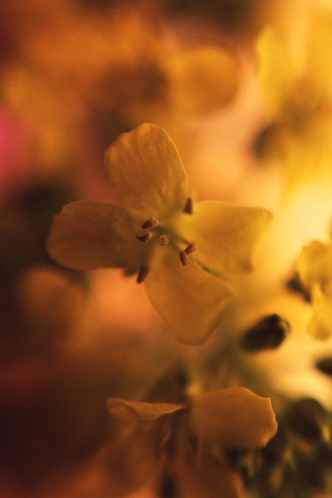 #photography#digital photography#macro photography #photographers on tumblr #original photographers#original photogrpahy#flowerporn#beauty#nature#flowers#spring#mood#tumblr#weheartit