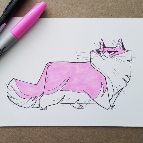 cat cats sketch drawing daily drawing daily cat drawings maine coon inktober inktober2017