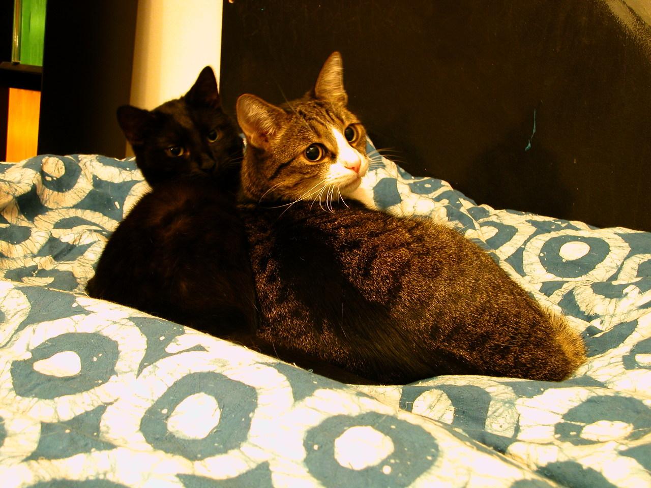 Nouria und Dabsch 4.12.2006 #cats#nouria#dabsch#black cat#chat noir#katzen#kater#cat content#gatti#chats#memories#schwarze katze