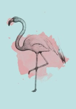 Wallpaper Flamingo Tumblr