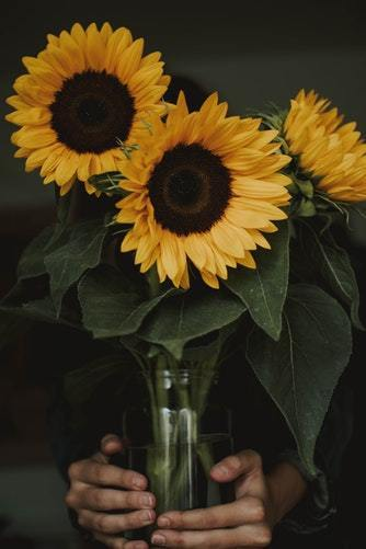 sunflower sunflowers hippie boho bohemian nature landscape aesthetic grunge vintage art yellow flowers pale indie hipster adventure explore inspiration motivation travel travelling photography