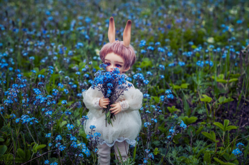 forget-me-not flowers nature BJD SOOM Hawa boy doll bunny inspiration blue cute