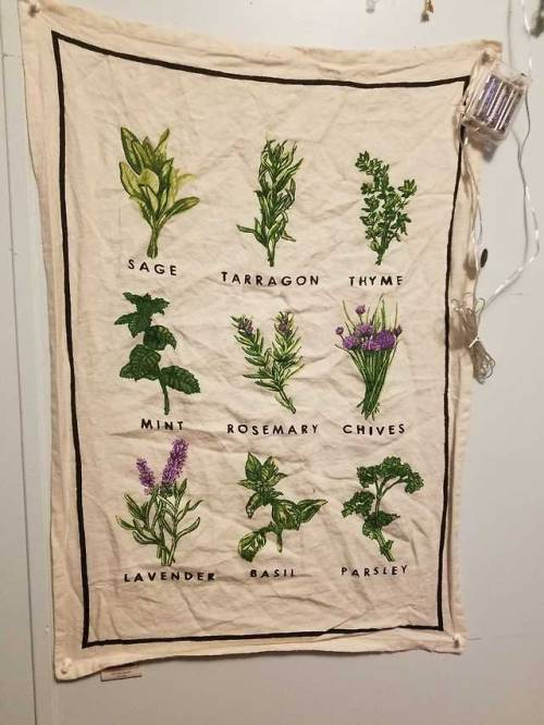 witch witchy Wicca witchblr herbs greenwitch kitchenwitch cute plants