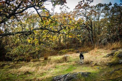oregonforestdog