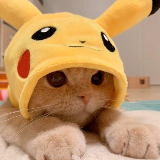 caturday on Tumblr