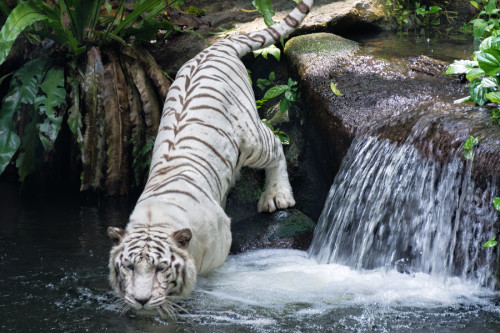 aztec-dream:  lemo-na:  ❁ Tropical posts to lighten your dash ❁  ☯ active jungle blog ☯