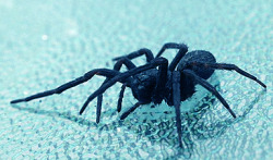 What keeps spiders on the ceiling? https://www.nanoappsmedical.com/what-keeps-spiders-on-the-ceiling/