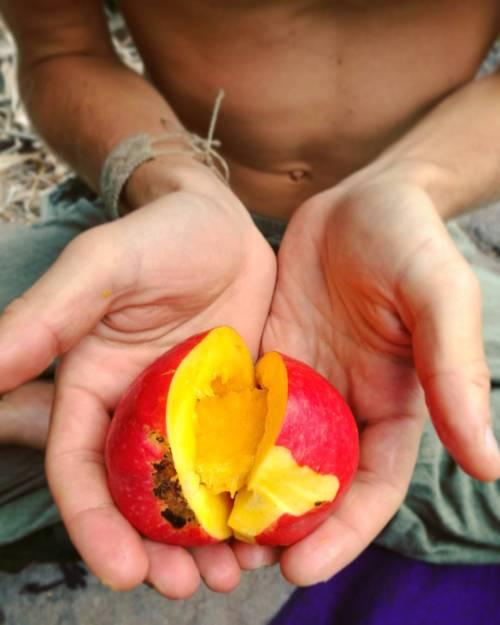ahimsa organic wildcamping lagomera nature travelcouple travel canaryislands natural travelblog mango grateful youniverse puravida fresh backpacking