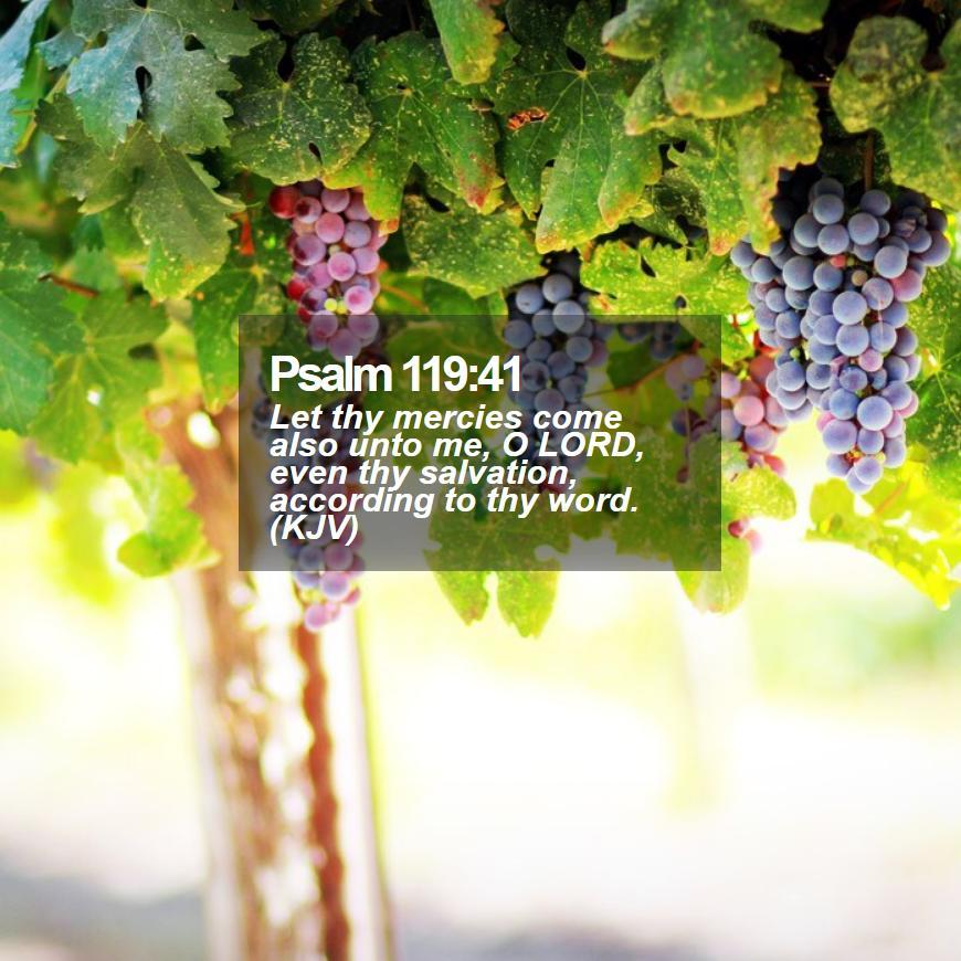 Daily Bible Verse - Bible Verse of the Day — Bible Verse of