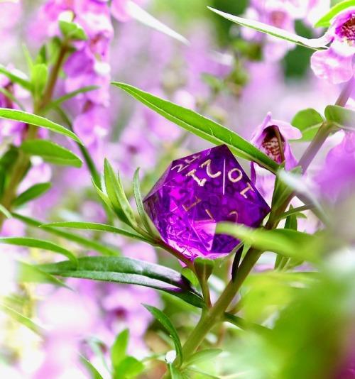 dice polyhedral dice d24 gamescience dice gamescience d&d dnd photography purple tones flowers queue