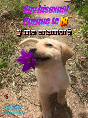Perros Tumblr