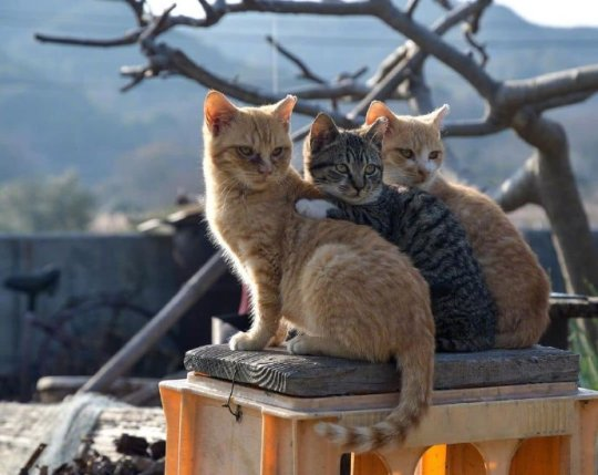 The lovely cats on Cat Island.