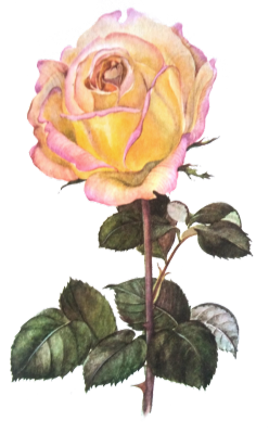 Flowers Png Tumblr