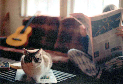 #indie#hipster#retro#boho#vintage#photography#cat#guitar