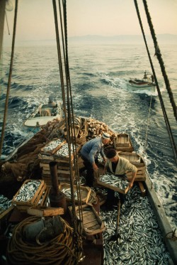 uhohmarty:Fishermen load their catch of sardines into crates on the Adriatic Sea, 1970