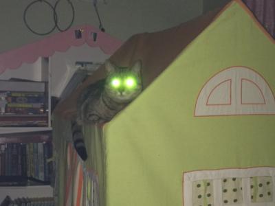 cat eyes | Tumblr