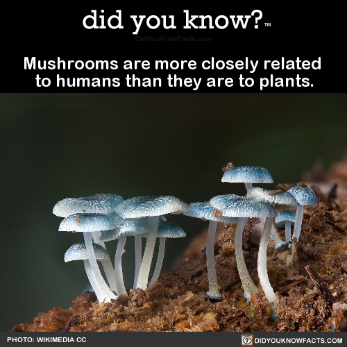 mushrooms-are-more-closely-related-to-humans-than