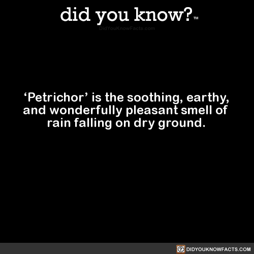 petrichor-is-the-soothing-earthy-and