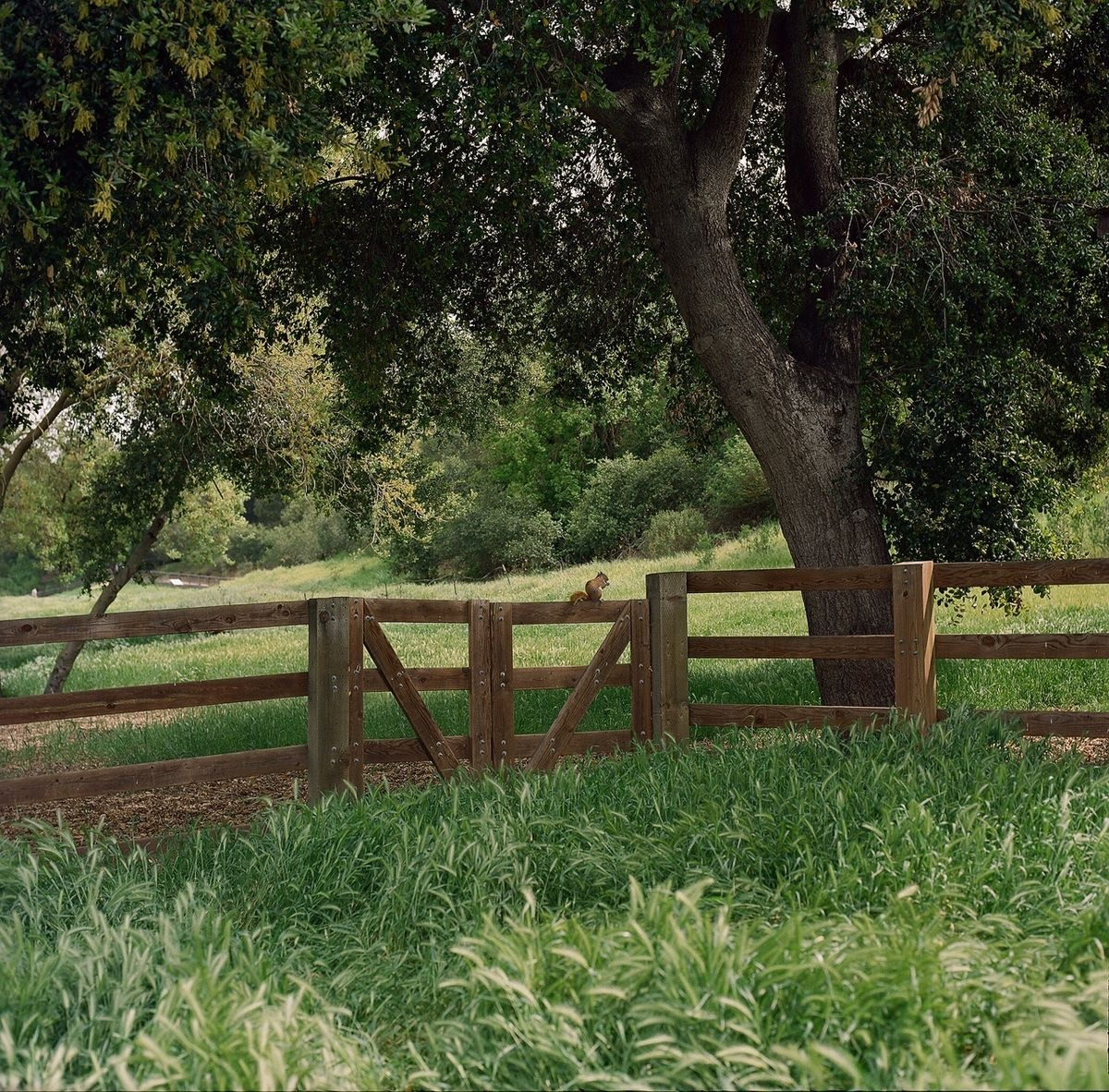 Photo by Branden Frederick #cottagecore#cozycore#farmcore#grandmacore#fairycore#naturecore#goblincore#springcore#summercore#cottage aesthetic#farm aesthetic #fairy tale aesthetic #nature#cottage witch#grandma aesthetic#spring