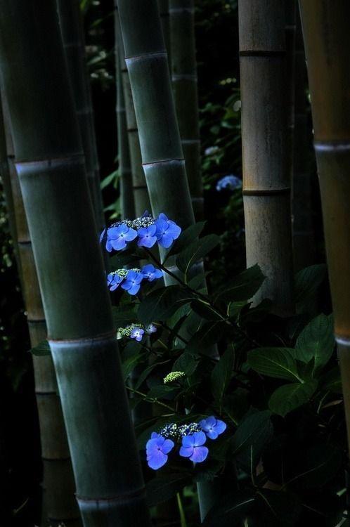 bamboo japan bambu flores flowers japao