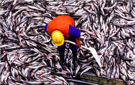 CommoPrices : et-si-cétait-votre-dernier-sushi