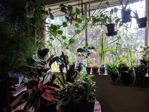 plants indoor jungle jungle houseplants tropical plants jungalowstyle jungalow plant obsessed Hobby grower