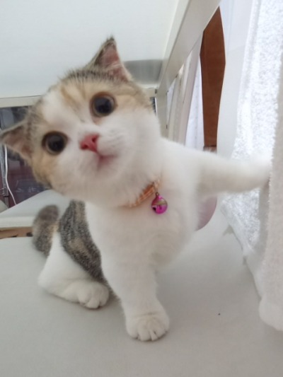 Watch - Kittens Fluffy tumblr pictures video