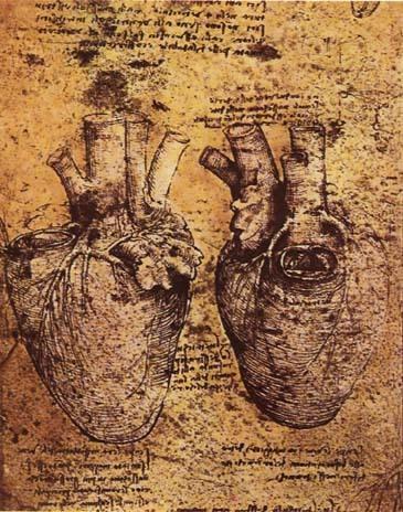 LEONARDO da VinciHeart and its Blood Vessels-DrawingBiblioteca Ambrosiana, Milan