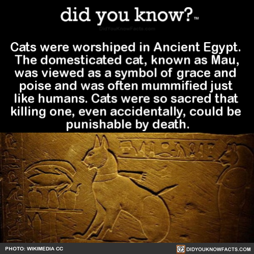 cats-were-worshiped-in-ancient-egypt-the