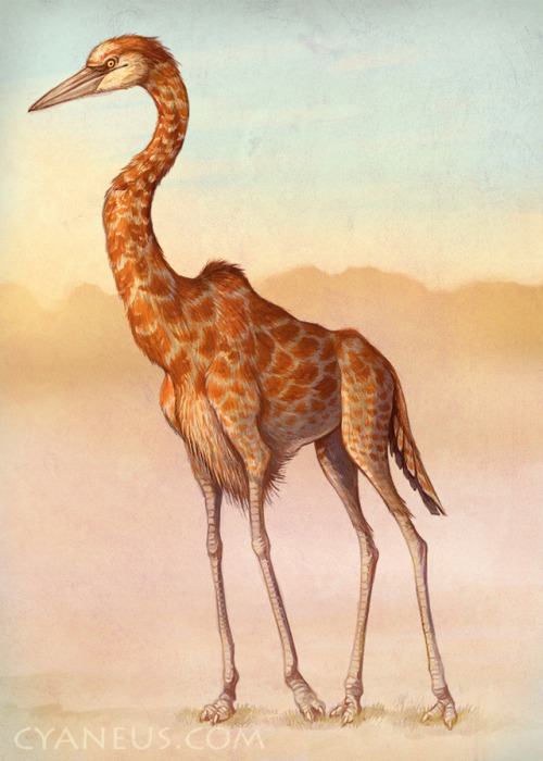 draconym: flouryhedgehog:  draconym: What if: a giraffe, but it's a bird  hey op do you take constructive criticism   Yes but only in the form of interpretive dance.