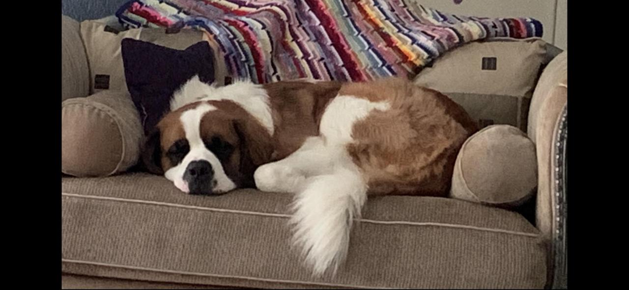 Couch puppers…. #Cute#Sweet#Aww#awesome