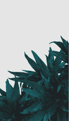 Unduh 55 Background Tumblr Leaf Terbaik