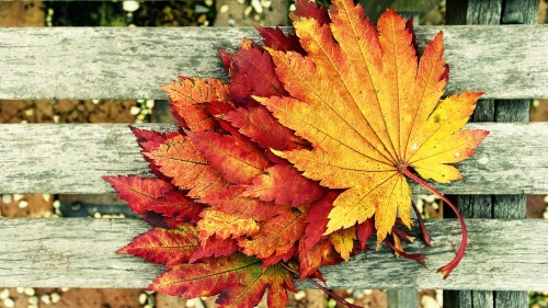 leaves changing colors rustic autumn fal i love fall