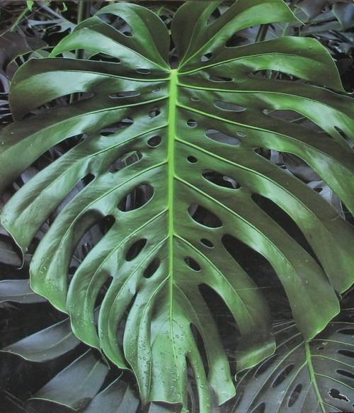 tumblr_p8e52qzXVf1x61wv3o1_500 Palm Type Leaf Houseplants on palm fertilizer types, palm leaves types, ponytail palm types, palm plants types,
