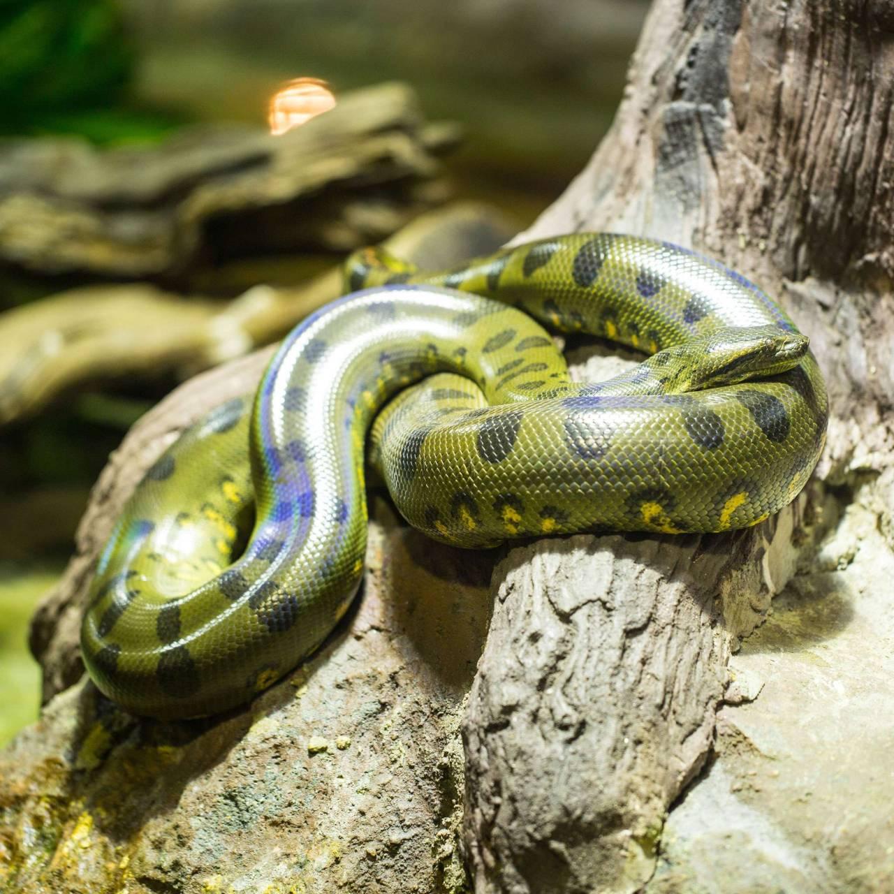 anacondas | Tumblr