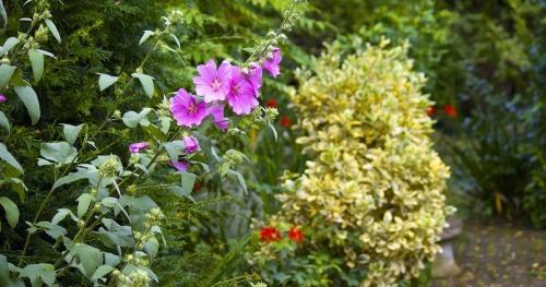 Summer Gardening Tumblr