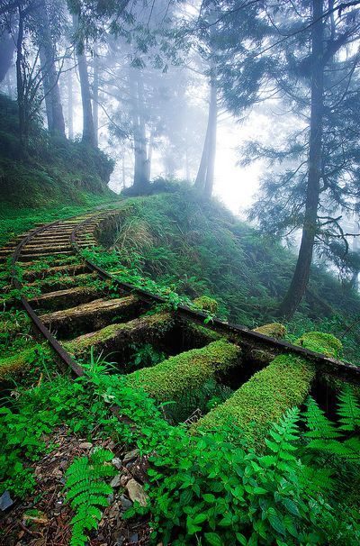 Jiancing Historic Trail in Taipingshan National Forest, Taiwan #asia#yilan#Recreation Area#nature#national park